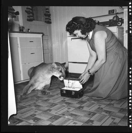 Mrs. Verna Koontz and mountain lion, 1956