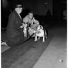 Glendale Dog Show, 1956