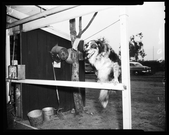 Dog story -- Hollywood Park, 1955