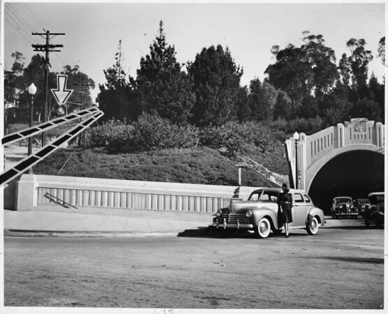 Removal of a group of trees near the southern boundary of Elysian Park, 1940
