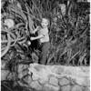 Wisteria Vine festival, 1958