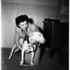 Lost dog returned from England, 1952