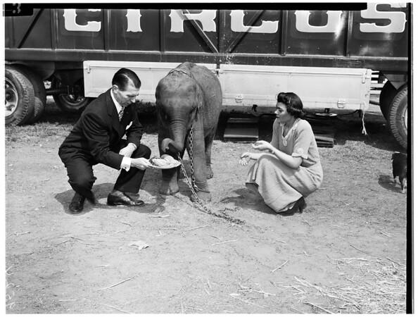 Republicans planning $100.00 a plate dinner, 1952