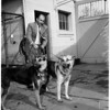 Couple attacked by their dogs (Doctor Paula Olivier and husband Maurice), 1958
