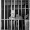 Contempt, 1951