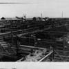 The cattle section of the Union Stock Yards, [s.d.]