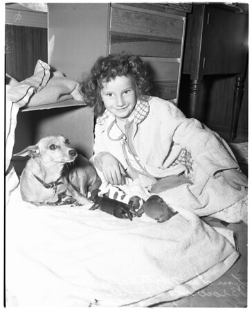 First puppies of 1958, 1958
