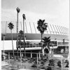 Dead palm trees outside of the Los Angeles Memorial Sports Arena, 1960