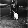 Albino kangaroo from Australia (a present for President Truman), 1952