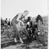 Exposition Park rose pruning, 1958