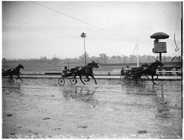 Horses -- race -- Harness at Santa Anita, 1958
