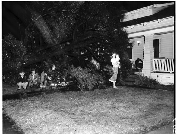 Tree falls on house during storm ...437 West 48th Street, 1952