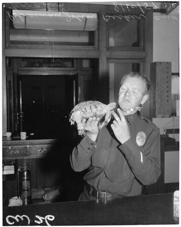 Found terrapin (turtle), 1957