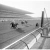 Horses -- Racing -- Hollywood Park, 1959