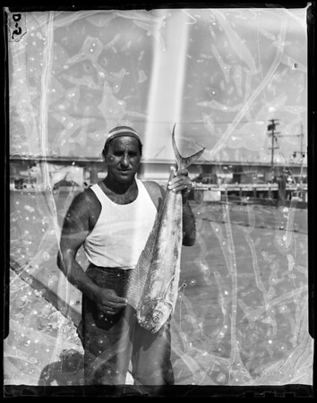 Unusual fish, 1952