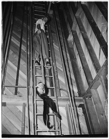 Monkey in fire station tower, 1951