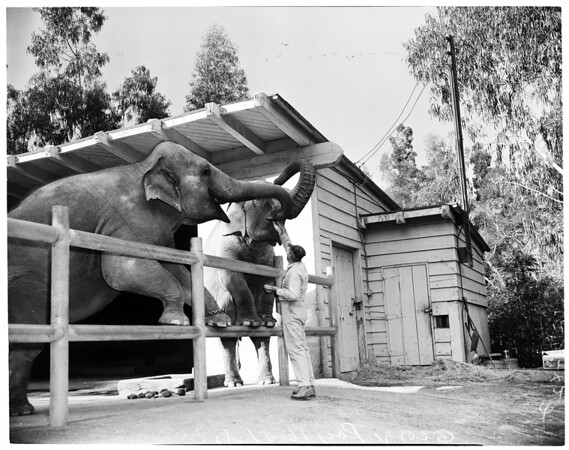 Feeding animals at Griffith Park Zoo, 1957
