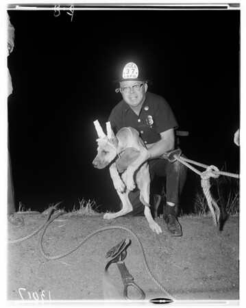 Firemen rescue dog down cliff, 1961