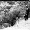 Car over cliff off Mulholland Drive, 1958
