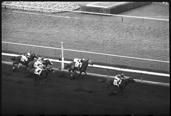 Horses -- Race -- Hollywood Park, 1958