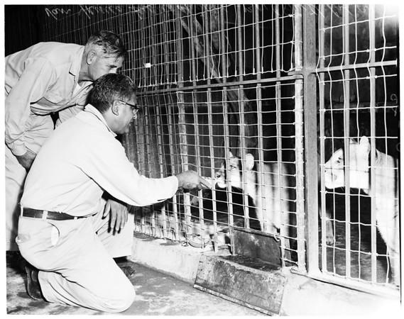 Feeding animals at Griffith Park Zoo, 1957