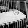 Abandoned babies at General Hospital Juvenile Hall, 1953