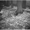 Snow on Mount Waterman, 1953