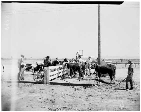 San Bernardino County Fair, 1953