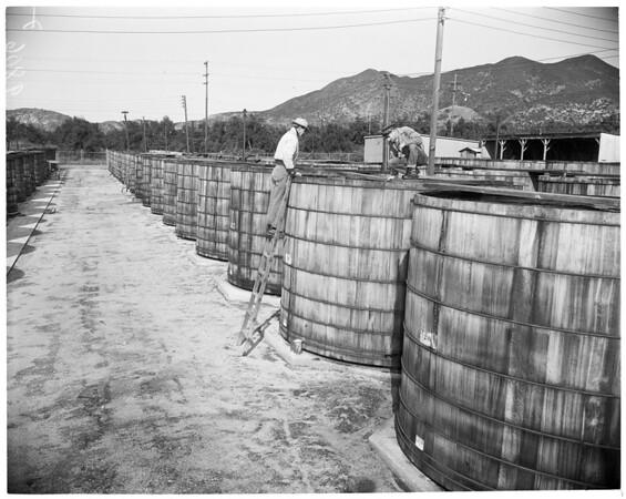 San Fernando Feature (Reay), 1953