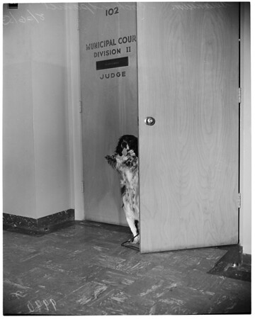 Dog owner fined, 1953