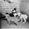 Animal week, 1953