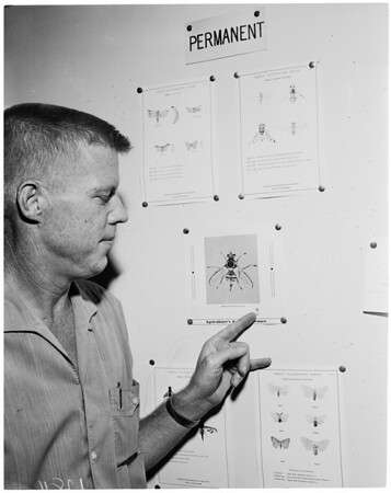 Oriental fruit fly trap, (Orange county section), 1960