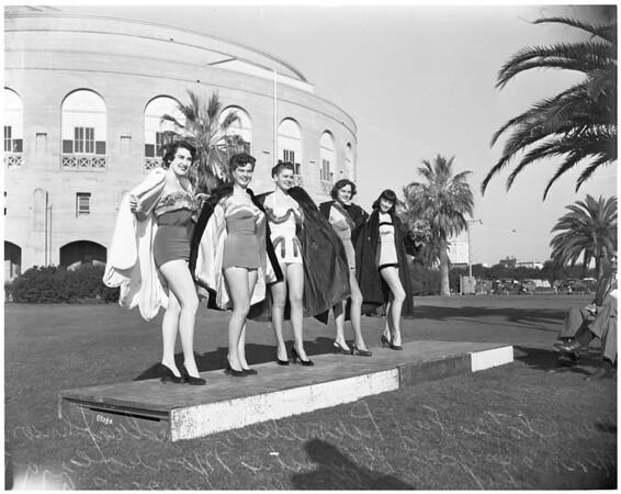 Chinchilla show advance art, 1953