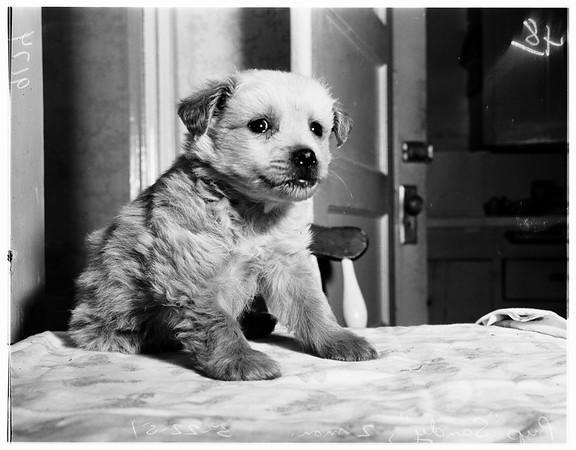 Crippled Puppy, 1951