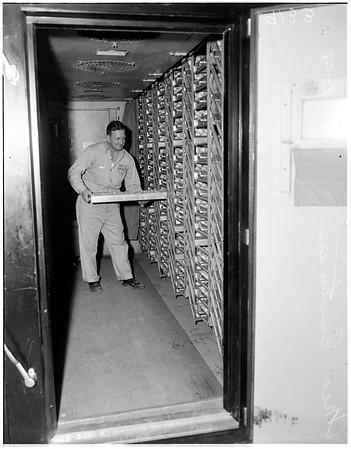 Poultry round up (Holly Hatchery), 1948