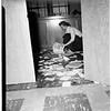 School vandalism, 1951