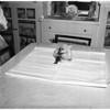 Dog adopts sparrow, 1951