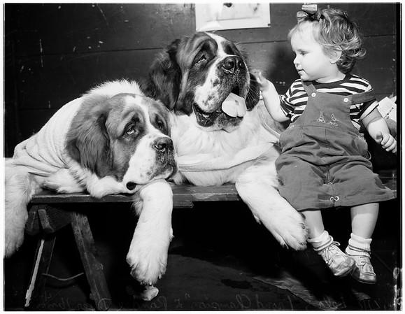 Dog Show Glendale Auditorium, 1951