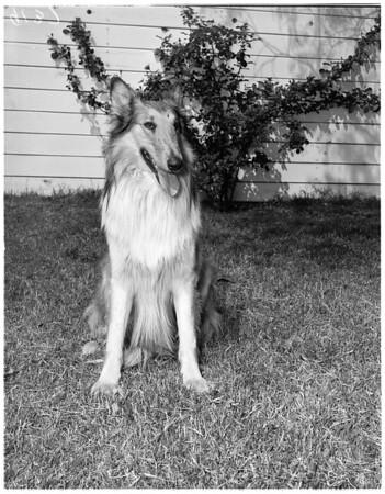 Row over a dog, 1951