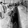 Boy drowns, 1951