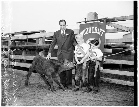 Baby steer...for woodcraft rangers, 1951