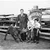 Baby steer...for woodcraft rangers, 1951