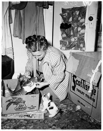 Cat in the tree (4458½ Willowbrook Avenue), 1951