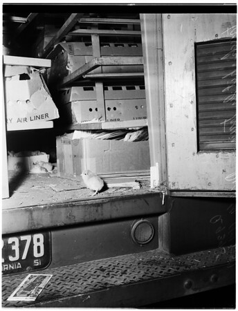 Train rams into chicken truck, 1951