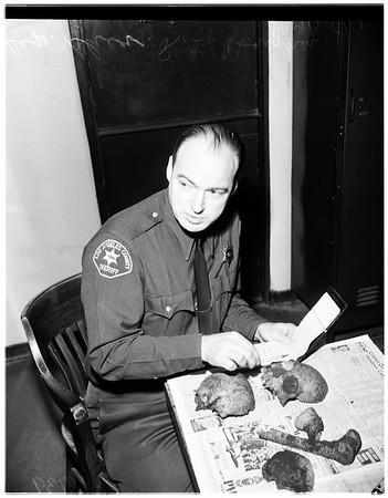 Human skull found, 1951