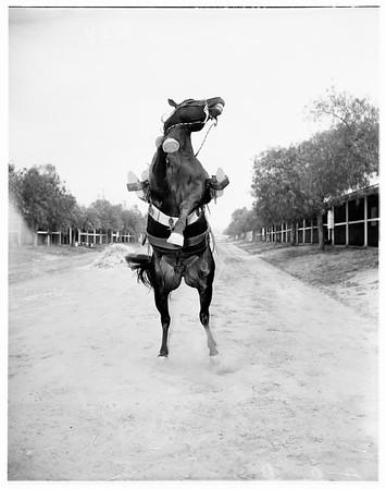 Hollywood Park, 1951