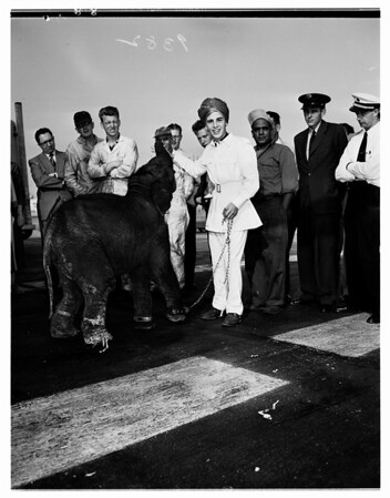 Home From India With Baby Elephant and Leopard, 1951