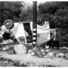 Milk truck wreck, 1951