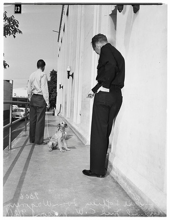 Pooch lands in jail... Cop bails her out, 1951