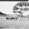 Rancheros visitadores... 2-day ride...Palos Verdes Estates, 1951
